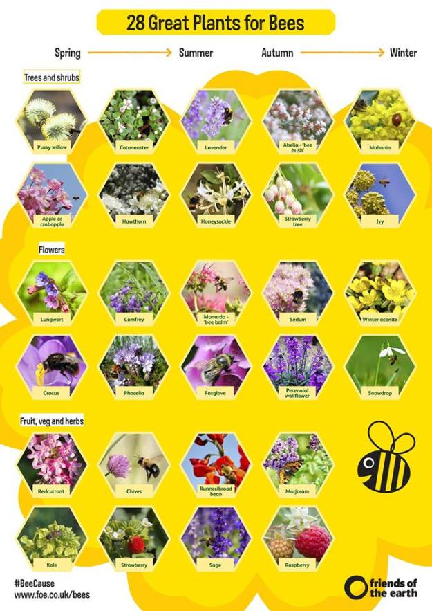 bee count