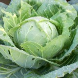 profileveg_cabbage-160x160